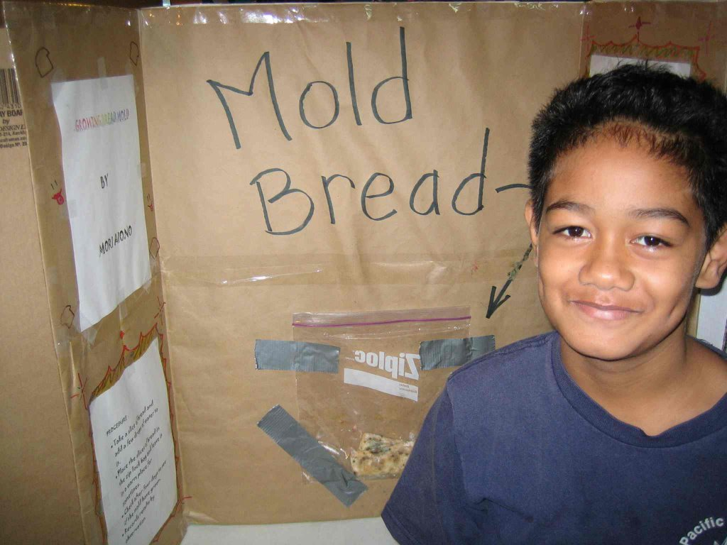bread mold science project