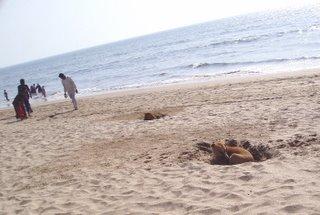 dogs of mumbai