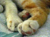 Casper's paws