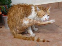 Fuzzy fur after the bath. Boy does Casper not like taking bath at all!