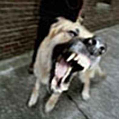 , BARK and SNARK] classes for dog reactive and dog aggressive dogs