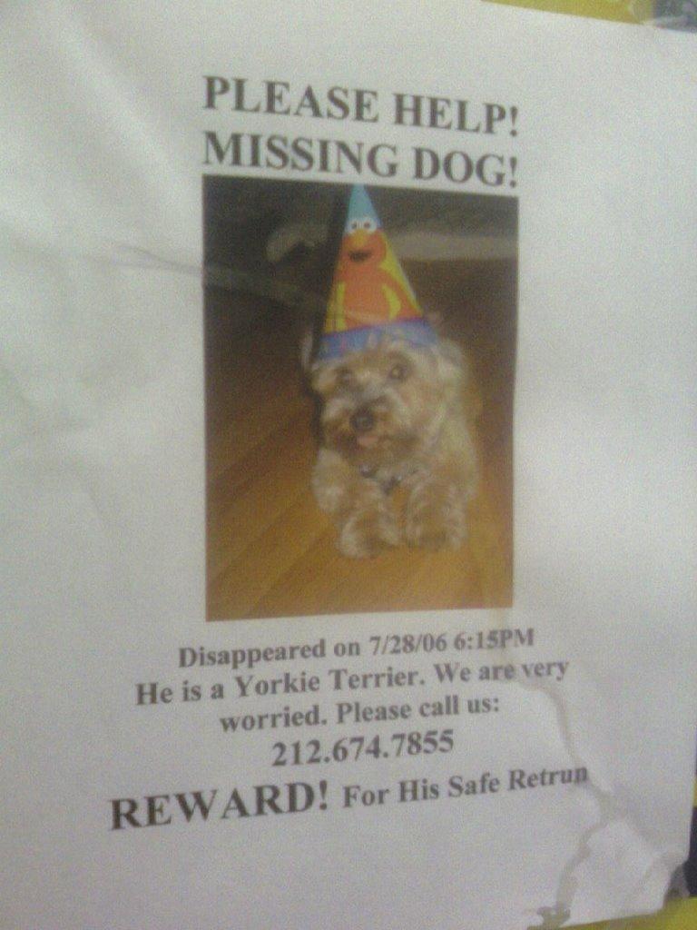 lostdog