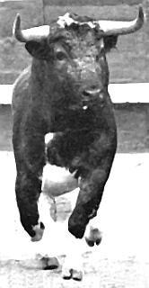Un toro de Luciano Cobaleda