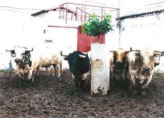 Novillada de los Herederos de María do Carmo Palha lidiada en Céret el 9 de julio de 1995