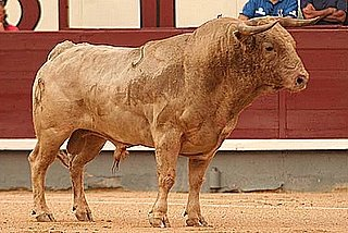 Toro de Prieto de la Cal en Madrid