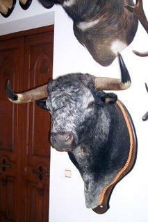 La cabeza del 'Toro de Ronda'