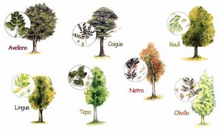 Tegnologica for Arboles de jardin de hoja caduca