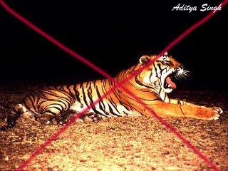 Tiger poaching in India