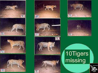 missing tigers of Ranthambhore