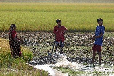 farming in Sundarbans