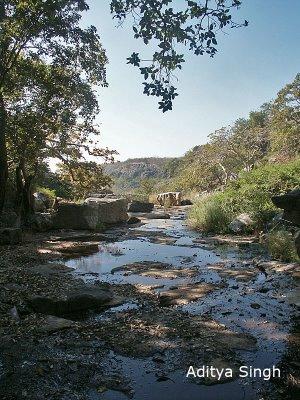 Stream valley in south Rajasthan. These are locally known as khos