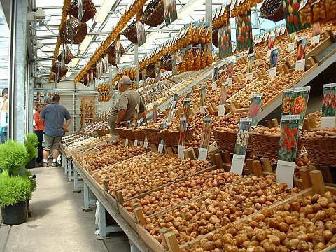Venta de bulbos en el Mercado de las Flores. Amsterdam, 2005