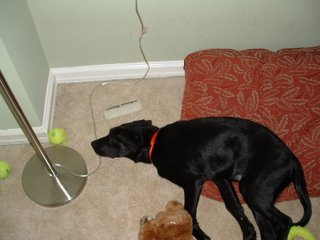 Some dogs like playing with an old tennis ball, or 2, or 13