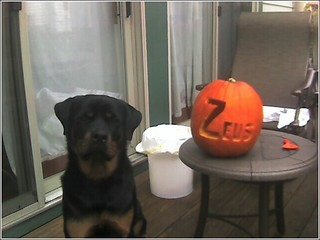 Diesel would have eaten the pumpkin...