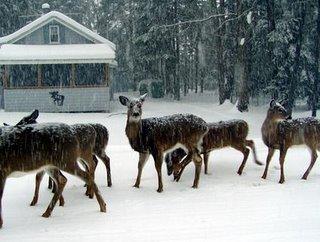 Old Forge winter deer