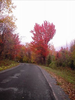 Moose River Road in Forestport