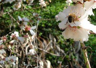 bee & blossom 2006