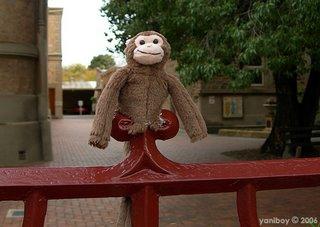 fence monkey 2006