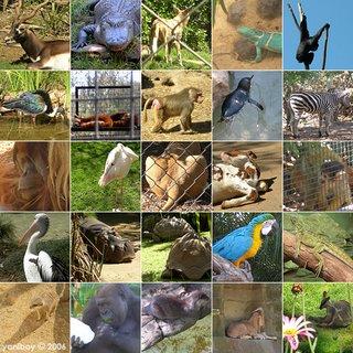 adelaide zoo 2006