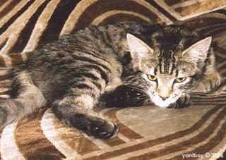 moujacat 2001