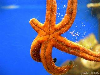 starfish 2006