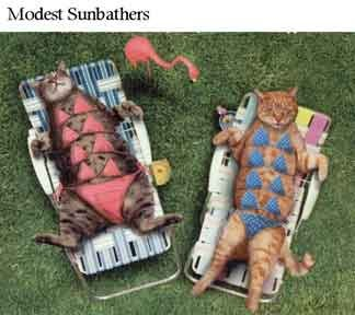 Modest Sunbathing Cats (sunbathers)