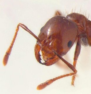 انتح                      ار نمل             ه