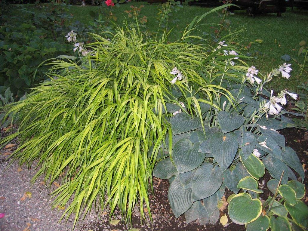 Cucino in giardino una bordura all 39 ombra for Piante perenni da bordura