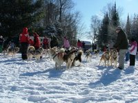 The dogsled teams