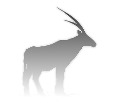 Arabian Oryx - the Qatar Perl Mongers' logo