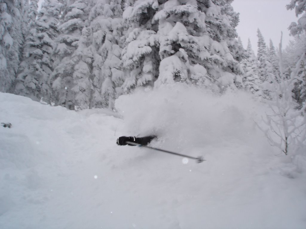 Hd wallpaper tree - Deep Powder Tree Skiing Images Amp Pictures Becuo