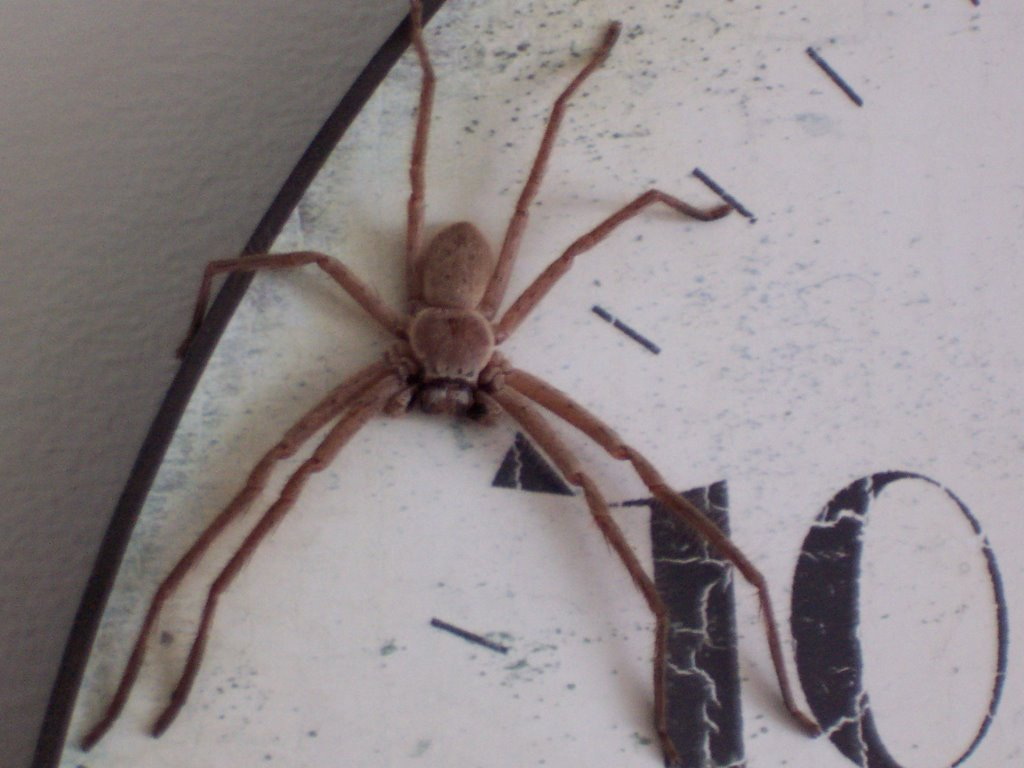 Clock Spider Pictures to Pin on Pinterest - PinsDaddy