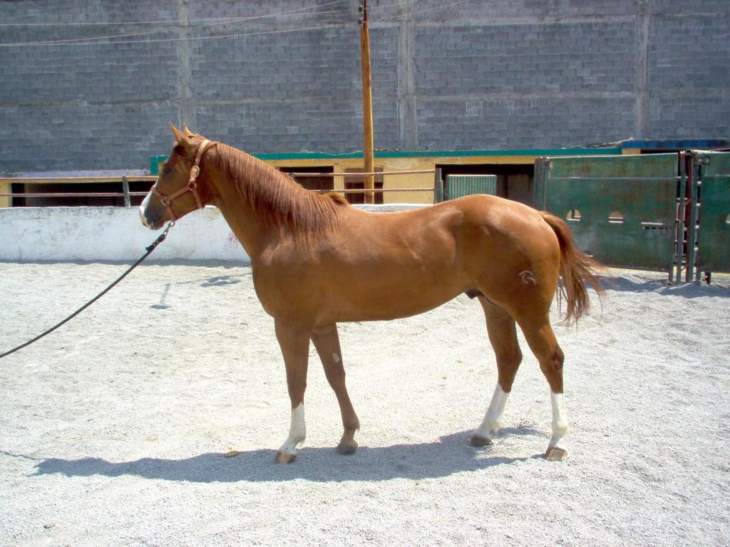 RANCHO LA ROSA, en San Carlos Tamaulipas, Mexico