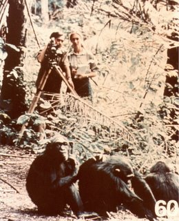 Jane Goodall and chimps, Vanne Morris-Goodall 1977