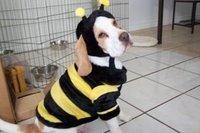 Beedog 1