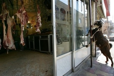 A goat in South Lebanon looking in the window of a butcher shop