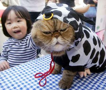 Hilarious picture of a cat dressed up in a cow costume and he doesnu0027t look very happy about it.  sc 1 st  facts around us & facts around us: Cat in a Cow Costume