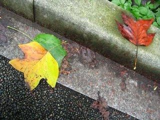 Early fall leaves on sidewalk, Chiyoda ward, Tokyo.