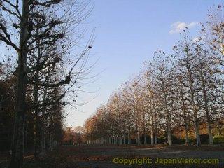Grove in Shinjuku Gyoen Park.