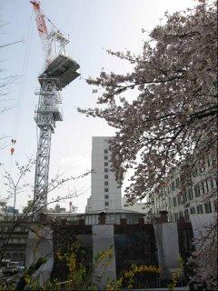 Spring in Yotsuya.