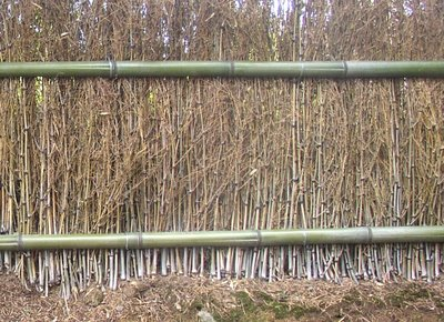 Simple but effective fencing made from young bamboo