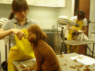 Dog barber, Tokyo - image Gerard de Kort