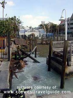 Key West Aquarium sharks swim away