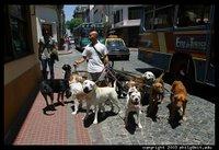 Passejador de gossos