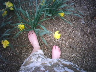 bare feet and daffodils