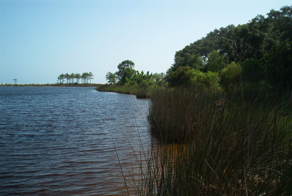 Exploring the nature of florida camp helen state park for Lake powell florida fishing