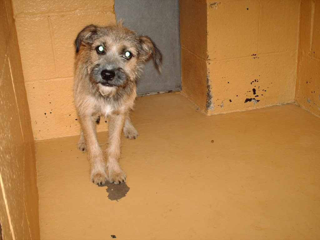 Viewing Gallery For - Border Terrier Mix