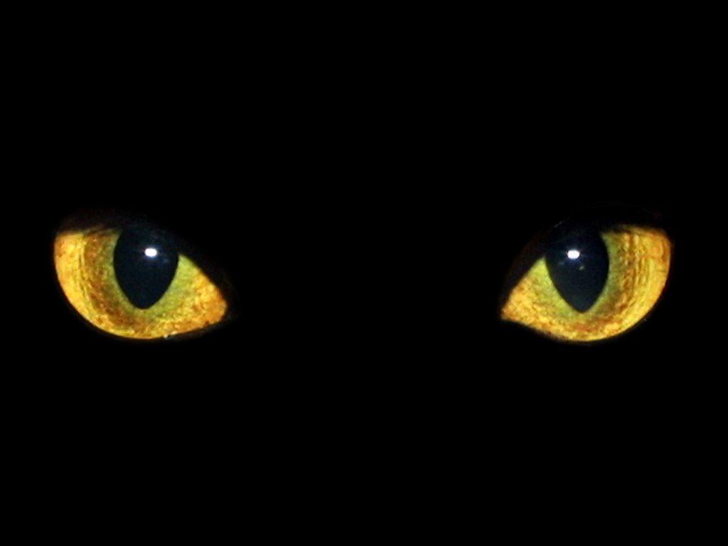 Arriba Los Tejados Tiene Ojos Noche Orejas