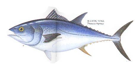 Menangkap Ikan Besar Teknik-teknik Menangkap Ikan