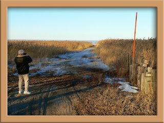 photo of Frank among the phragmites at Bay City State Park - February 2005